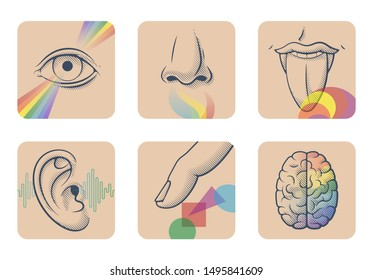 Set of five human senses: sight, smell, taste, hearing and touch. Six anatomical images: nose, tongue, eye, ear, finger and brain. Vector illustration of sensory organs