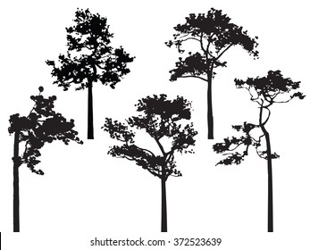 Set of five pine tree silhouette vector