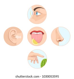 Set of five senses man. Anatomy, human organs. Nose smell, eyes vision, ears  hearing, skin touch, language  taste and taste buds. Perception of environment, sensations. Vector illustration.