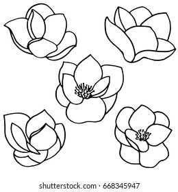 Set of five vector silhouettes of hand drawn magnolia flowers isolated on white background. Vector illustration.