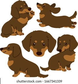 Set of flat colored Dachshund illustrations chocolate & tan color