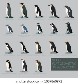 Set of flat geometric species of Penguins