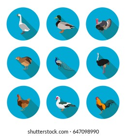 set of flat icons poultry in vector format