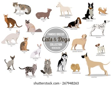 Set of flat sitting or walking cute cartoon dogs and cats. Vector illustration
