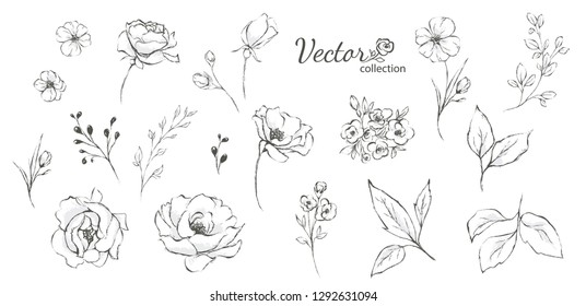 Set of floral branch. Flower rose,  leaves. Wedding concept. Collection flowers for invite. Vector arrangements for greeting card or invitation design