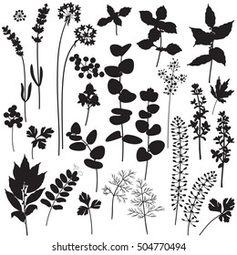Set of floral elements and berries silhouette. Black shape of plants isolated on white.