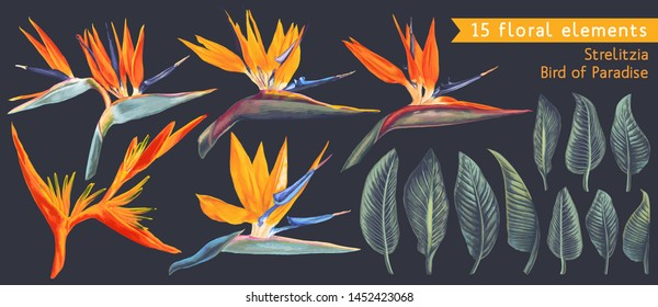 Set of floral elements with Strelitzia Reginae, tropical flowers and leaves. Vector, isolated on black. Realistic style, hand drawn. South African plant, called crane flower or bird of paradise.