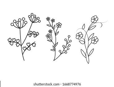 Set of floral hand-drawn line art