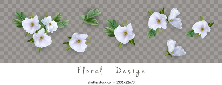 Set of floral vector bouquets. Design of different white flowers isolated on transparent background