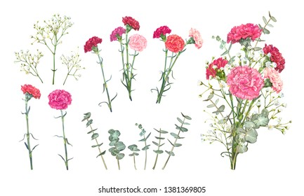 Set floral vectors elements for bouquet design. Red and pink carnations, tender white Gypsophila, leaves of Eucalyptus Baby Blue Spiral. Bunch with carnations is a symbol of Mother's day Holiday
