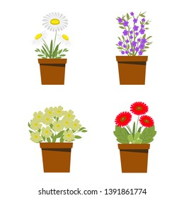 Set of flower bouquets, potted flowers, chamomile, flowers and leaves, white background, vector illustration