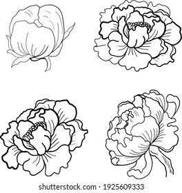 Set of flower vector for painting on background.Peony for printing on curtain.Traditional  Asian floral illustration for embroidery style.Rose flower.Beautiful line art for summer.