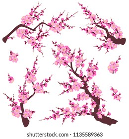 Set of flowering tree branches and shoots with pink flowers isolated on white background.  Plum blossom is a symbol for spring.  Floral decoration for Chinese New Year. Vector flat illustration.