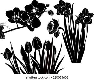 set of flowers isolated on white background