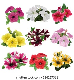 set of flowers, multicolored petunias with leaves