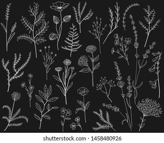 set flowers and plants leaf hand drawn   black vector