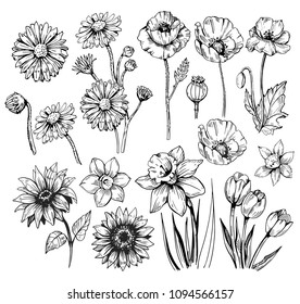 Set of flowers: poppy, daffodils, tulip, sunflower, daisy. Hand drawn sketch converted to vector.