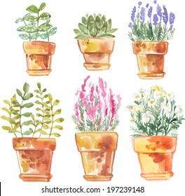 Set flowers in pot watercolor vector