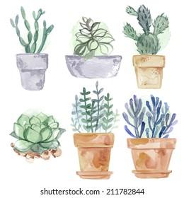 Set flowers in pot watercolor vector