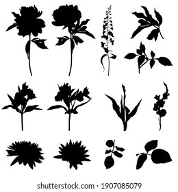 Set of flowers silhouettes. Black summertime poster. Collection of scrapbooking elements for beach party with exotic plants.