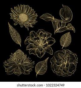 Set of flowers. Vector illustration.