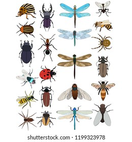 set of fly, bee, beetle, dragonfly