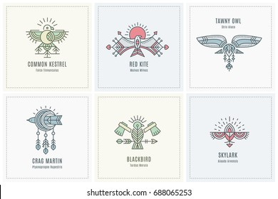 Set of flying Bird Logo design, geometric tribal archaic emblem. Linear style vector template for label. Colorful, pastel tints
