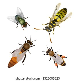 Set of flying insects: bees, fly, wasp. Vector illustration isolated on white background.