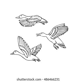 Set of flying wild birds. Duck hunting. Mallard drawing.  Vector illustration.