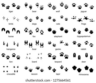 Set of footprints of wild animals on a white background