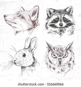 Set forest animals: fox, racoon, rabbit and owl (eagle owl), drawn by hand. See also other sets of animals.