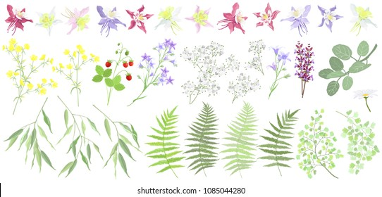 Set of forest and garden summer plants and flowers. Vector illustrations, imitation of watercolor painting.