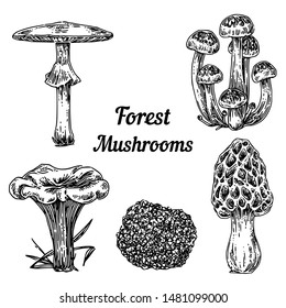 Set of forest mushrooms. Pale toadstool, morel, chanterelle, honey agaric and truffles. Sketch Engraving style. Vector illustration