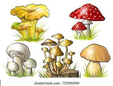 Set of forest mushrooms. Vector illustration