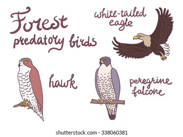 Set of forest predatory birds isolated illustrations. Hawk, white-tailed eagle and peregrine falcon.