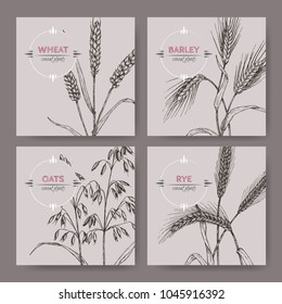 Set of four banenrs with bread wheat, rye, barley and oats sketch. Cereal plants collection. Great for bakery, agriculture, farming design.