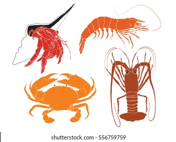 Set of four crustaceans - lobster, mud crab, prawn and hermit crab isolated on a white background