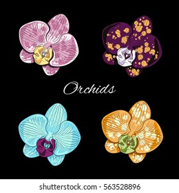 set of four isolated phalaenopsis flowers, one of the most popular orchids, on black background, vector illustration