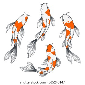 Set of four traditional japanese koi fishes top view. Simple sketch style drawing of red and white fishes.