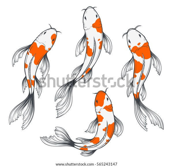 Set Four Traditional Japanese Koi Fishes Stock Vector Royalty