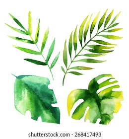 Set of four tropical leaves. Hand drawn leaves illustration in watercolor.