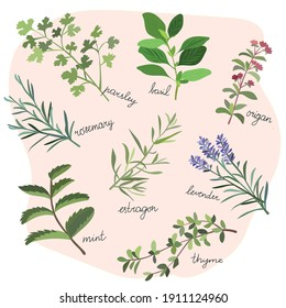 A set of fragrant herbs