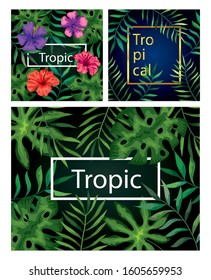 set of frames tropicals of flowers with branches and leafs vector illustration design
