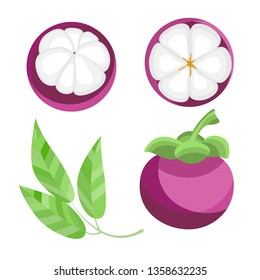 Set Fresh Mangosteen Fruit Queen on a white background. Whole, sliced and halved Mangosteen graphics. Vector illustration.