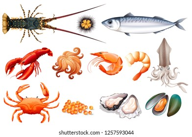 Set of fresh seafood illustration