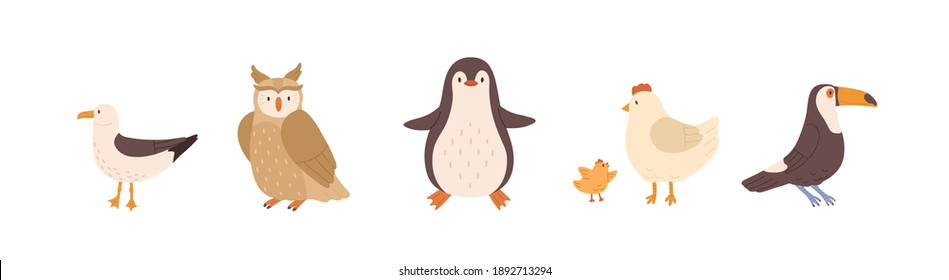 Set of front and side views of cute birds. Gull, owl, penguin, chicken, hen and toucan isolated on white background. Colored flat vector illustration