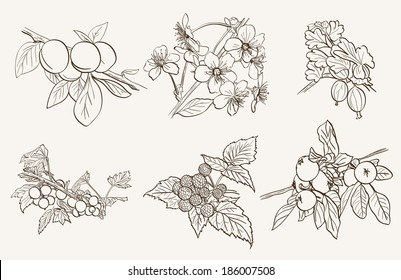 set of fruits and berries on a branch. Vector sketches