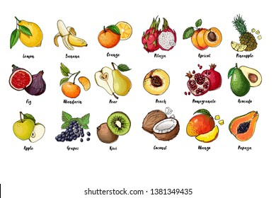 Set of fruits drawn a line on a white background. Vector sketch. Sketch line. Pitaya, apricot, pineapple, peach, pomegranate, avocado, coconut, mango, papaya, Lemon, banana, orange, fig, mandarin