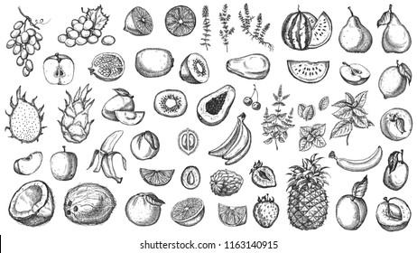 Set of fruits and herbs. Hand drawn colorful fruits collection isolated on white