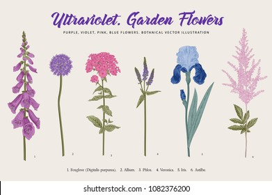 Set Garden Flowers. Classical botanical vector illustration. Blue, violet, pink, purple flowers.